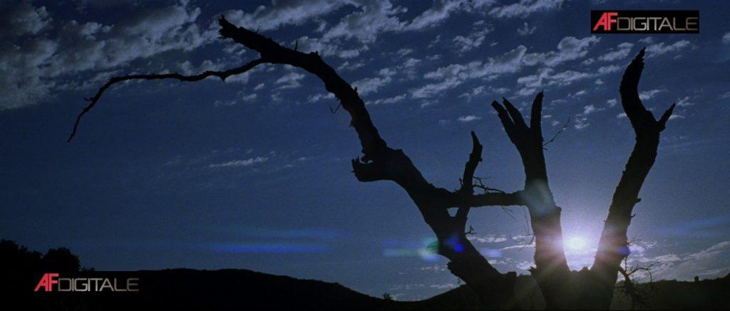 Donnie Darko – Midnight Classics [BD]